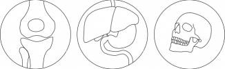 Bild von Kniegelenk, Organe, Schädel